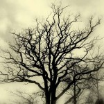 tn_Tree-Silhouette-Misty_b