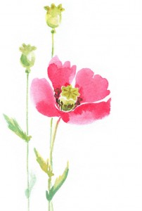 Poppy_Watercolor_crop_resized_b