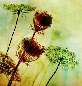 tn_Wild-Flowers-cropped_b