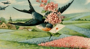 Swallow_letter_crop_resize