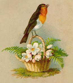 Basket_Robin-crop_gf